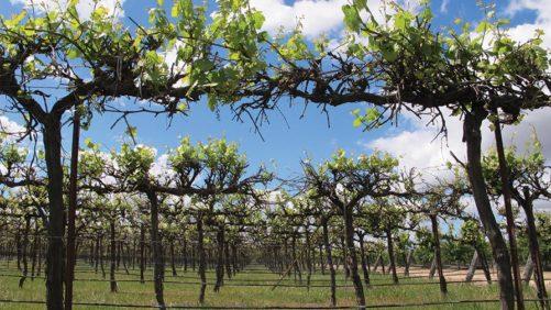 Organization Seeks Winegrape Exemption Produce Safety Rule