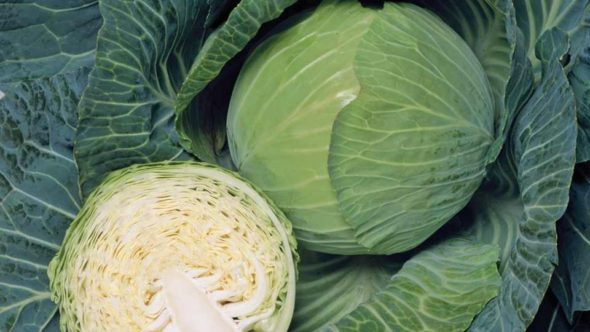 Cabbage F1 Promise for web