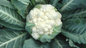 6 Of The Latest Cauliflower And Broccoli Varieties