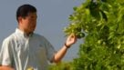 UF/IFAS scientist Daniel Lee inspects immature citrus fruit in a Florida orange grove.
