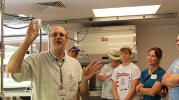 USDA YGA apple biotech lab