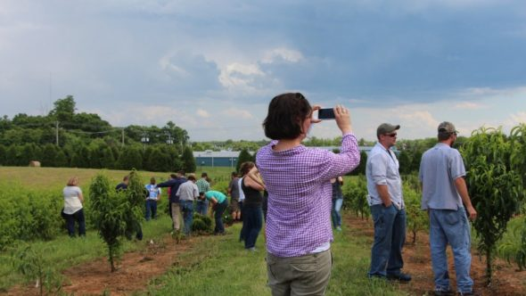 Tracy Leskey, Director of USDA's Appalachian Fruit Research Laboratory in Kearneysville, WV, takes a moment to snap a photo of the Young Grower Alliance members touring a peach architecture research block. (Photo credit: Christina Herrick)