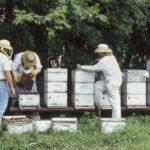 USDA veteran beekeepers