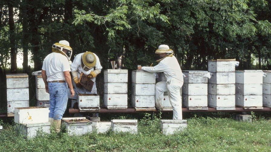 The ARS Honey Bee Breeding, Genetics and Physiology Lab and the Louisiana Armed Forces Foundation are teaching beekeeping to veterans. (Photo credit: Scott Bauer, USDA-ARS)