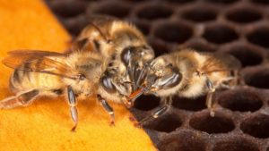 CEU Series: Be Aware of Bees When Applying Pesticides