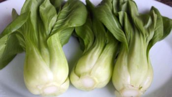 Bok Choy or Pak Choy FEATURE