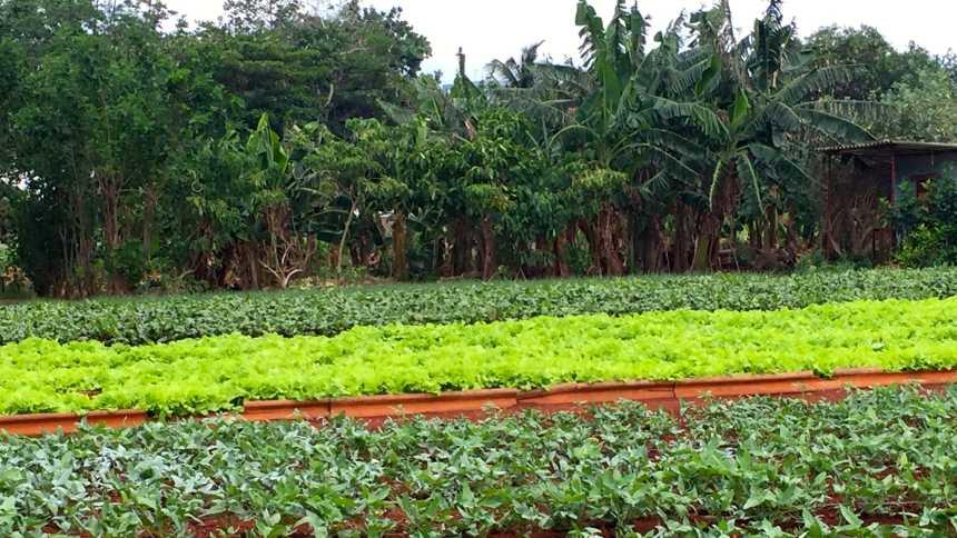 Urban vegetable farm in rural Cuba