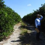 Citrus Postbloom Fruit Drop field day hosted by BASF in Florida
