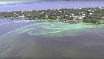 South Florida algal bloom from the air near Stuart, FL