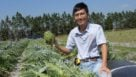 Shinsuke Agehara of UF/IFAS holding an artichoke in the middle of a Central Florida farm plot
