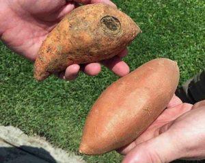 Photo courtesy of American Sweet Potato Marketing Institute