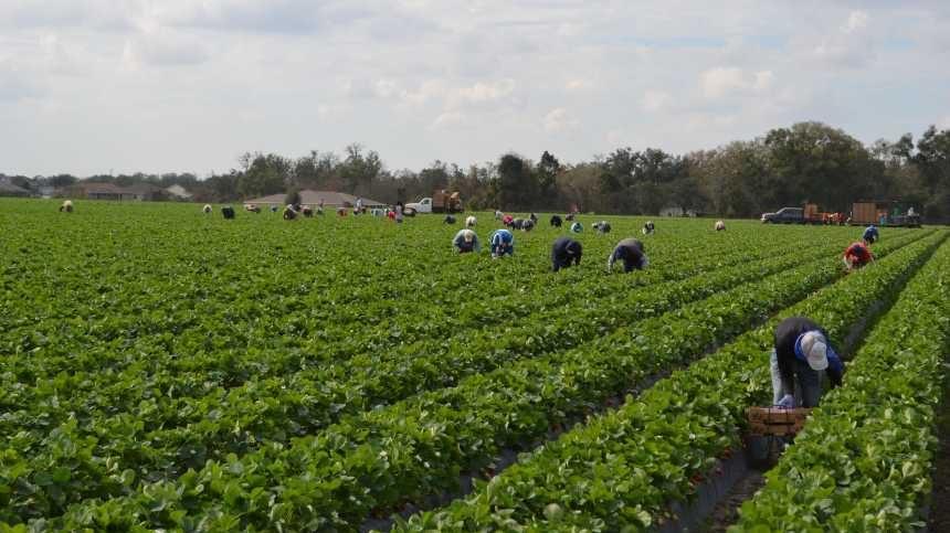 Transcending Farm Labor Crisis No Easy Task [Opinion]