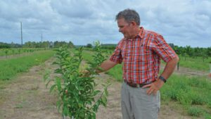 Florida Farmer Takes Fresh Approach To Growing Citrus