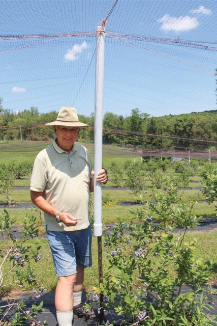Bob McConnell shows the easy-to-use way to raise or lower his bird netting for pickers. (Photo credit: Christina Herrick)