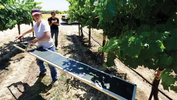 "UC Cooperative Extension Viticulture Advisor Lindsay Jordan installs a solar ""Paso Panel."" (Photo Credit: Matthew Fidelibus)"