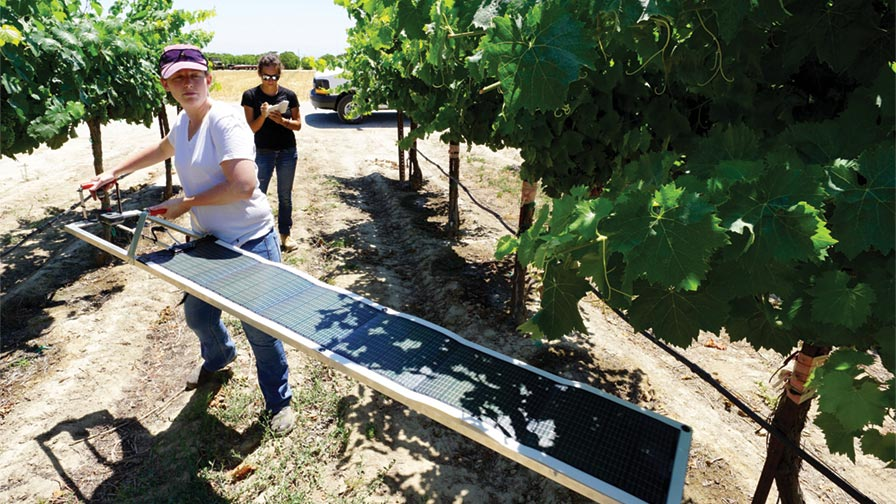 "UC Cooperative Extension Viticulture Advisor Lindsay Jordan installs a solar ""Paso Panel."" (Photo Credit: Matthew Fidelibus)"