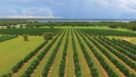 Spring Valley Farms in Umatilla, FL, from a drone