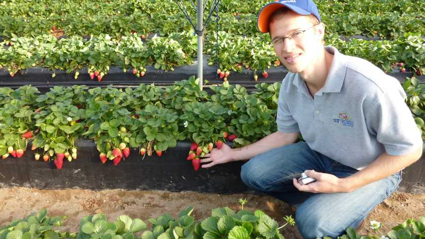 Vance Whitaker next to a bed of strawberries