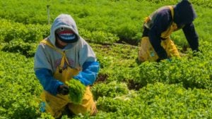 Farmworker Overtime Expansion Sent To California Governor's Desk