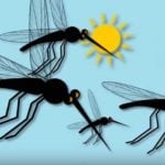 Mosquito illustration from Florida Department of Health video