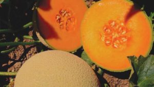 10 Cantaloupe And Melon Varieties You Need To Know