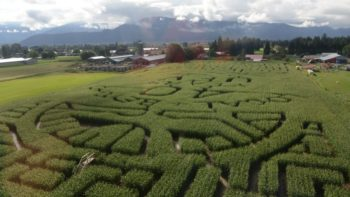 corn-maze-aerial-view-from-google-free-images-feature
