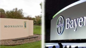 Split view of Monsanto and Bayer company signage