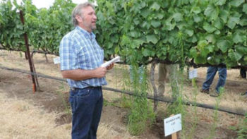 Weed science advisor John Roncoroni explains that Roundup doesn't do much for horseweed during a presentation about the use of herbicides in vineyards. Weed science advisor John Roncoroni explains that Roundup doesn't do much for horseweed during a presentation about the use of herbicides in vineyards. (Photo credit: University of California Division of Agriculture and Natural Resources)
