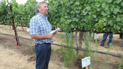 Vineyard Weed Control Should Start Now