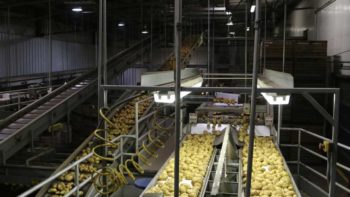 At Sterman Masser Potato Farms, spuds are washed, cooled, dried, and graded. The farm's packing practices allow it to pack to order and offer the same-day or next-day delivery.  Photo credit: Rosemary Gordon