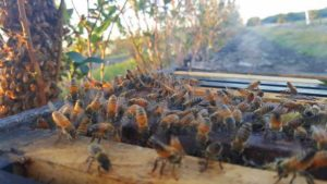 Felony Charges in Beehive Thefts