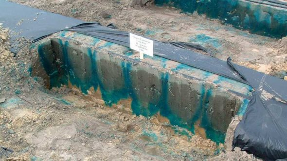Where does the water run? Follow the blue dye as seen during this demonstration in a plastic mulched system. Photo courtesy of UF/IFAS