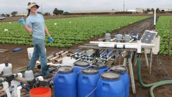 UC-Davis and UC Cooperative Extension researchers have conducted field trials simulating water of  different nitrate concentrations.