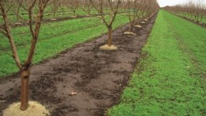 Sequential Preemerge Herbicide Applications Provide Long-Term Weed Control