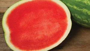 Clifton Seed's Excursion watermelon
