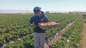 Precision Ag Technology Moves Forward For Vegetable Growers