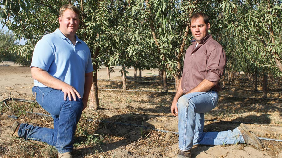 Billy Lyons, left, and his cousin, James Bogetti, show off the tight spacing (4 feet) of their trial block of 'Independence' almonds just west of Modesto, CA. (Photo credit: David Eddy)