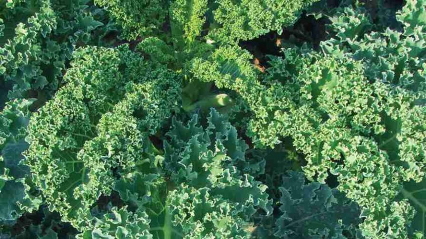 15 Leafy Greens Varieties You Need To Know