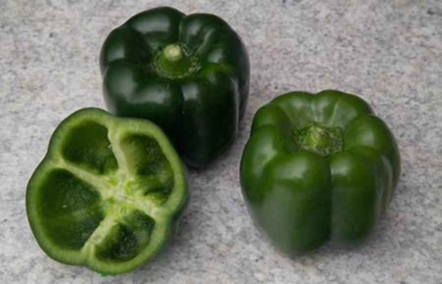 'Overgreen' pepper from Syngenta maintains deep color longer and provides growers with broader window for harvest. Photo courtesy of Syngenta