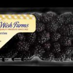 A product shot of Wish Farms' elongated blackberry clamshell