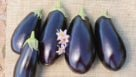 A1014 Egglplant from Seedway