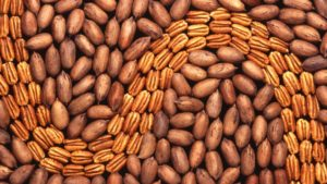 Startup Costs a Challenge to Pecan Growing