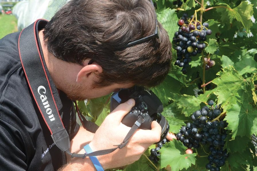 Taking high quality photos and emailing them to experts can be an effective way to help diagnose disease problems. Ryan Slaughter, a research assistant at OSU South Centers, is shown here taking close-up pictures of grape disease problems. (Photo credit: Gary Gao)