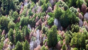 California Now Has More Than 100 Million Dead Trees