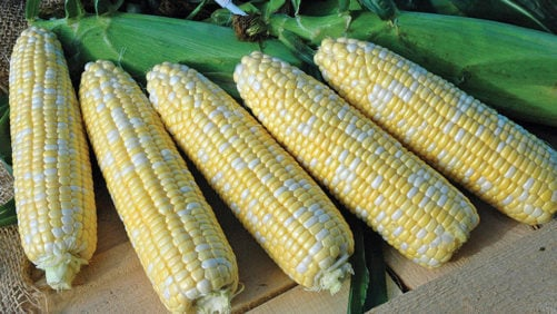 Siegers Seed Company 2016 Vegetable Variety Showcase