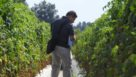 2016 Florida Ag Expo tomato variety field tour