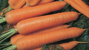 gz_000233_carrots_napoli
