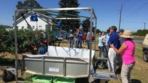 Researchers Develop Lower-Cost Options For Blueberry Harvest Assist Systems