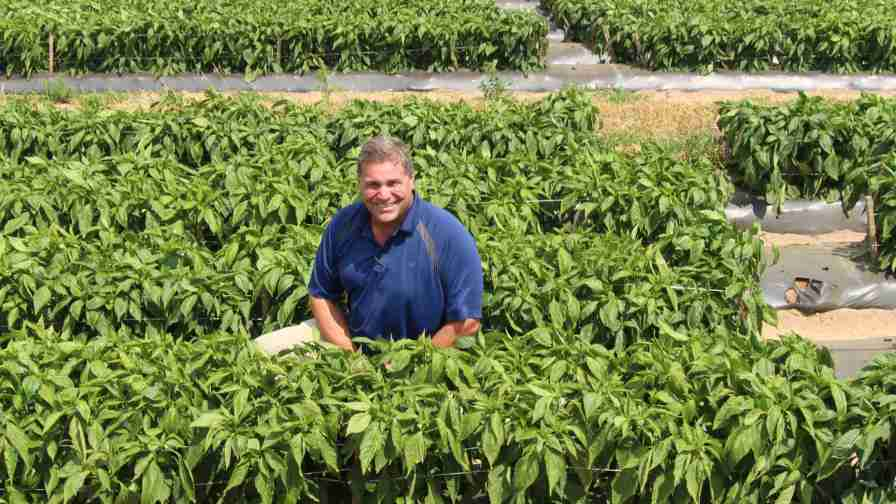 Jason Kuehnle of Michigan-based Golden Plain Farms found his niche growing peppers. Photo credit: Christina Herrick
