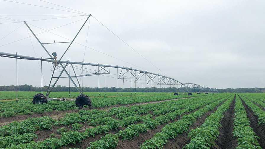 Low-volume center pivot irrigation at Jones Potato Farm in Florida